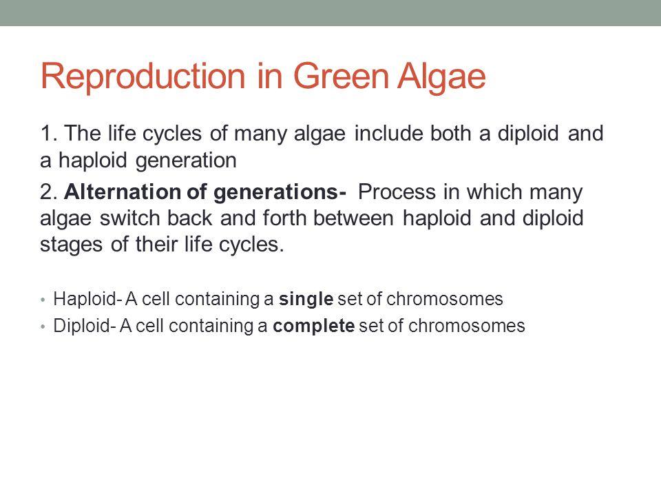 Reproduction in Green Algae