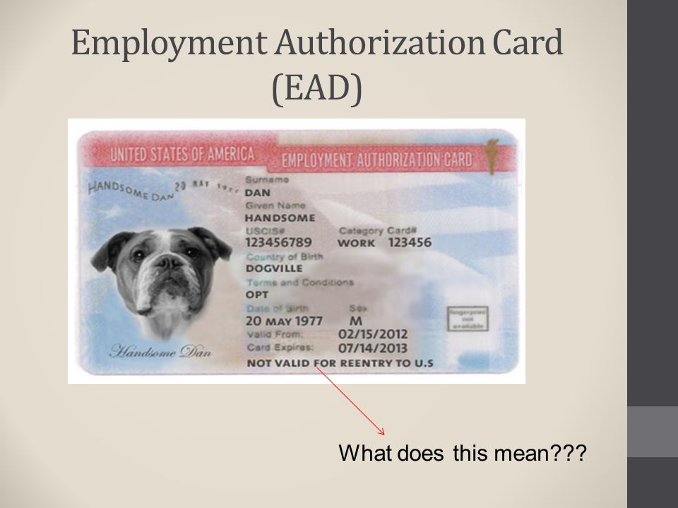 Employment Authorization Card (EAD)