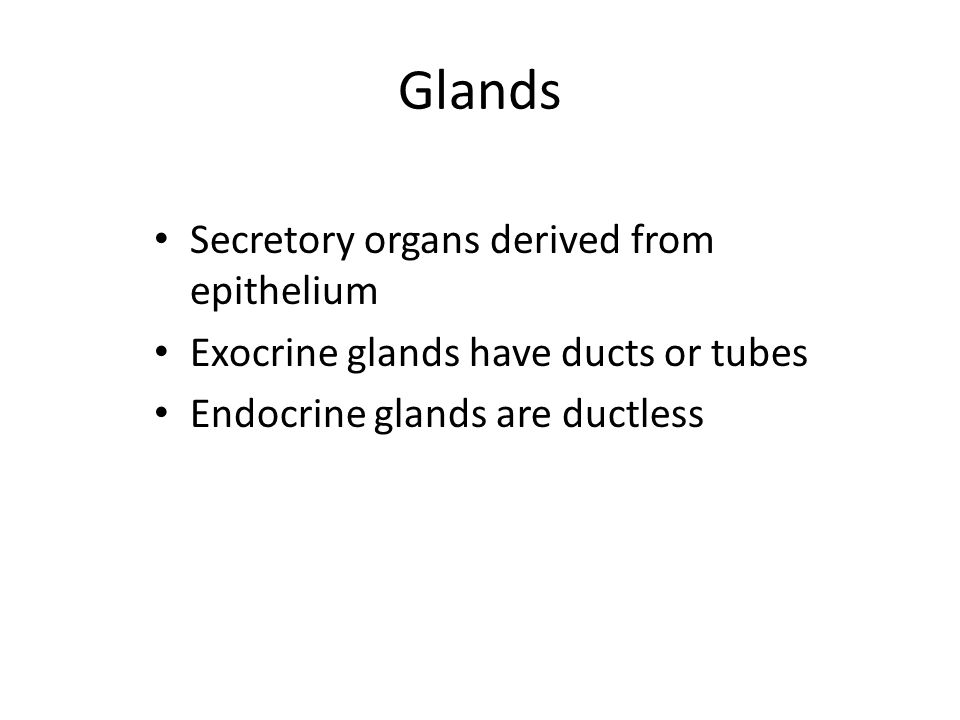 Glands Secretory organs derived from epithelium