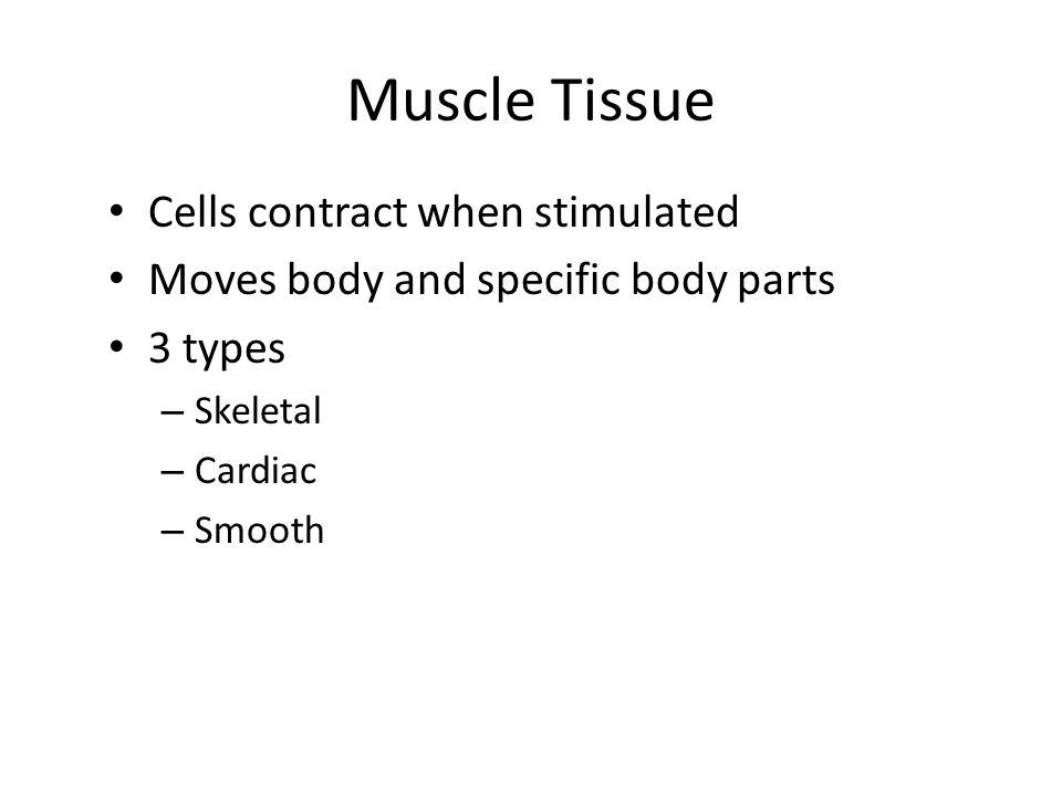 Muscle Tissue Cells contract when stimulated