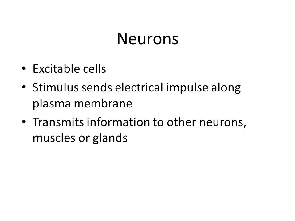 Neurons Excitable cells