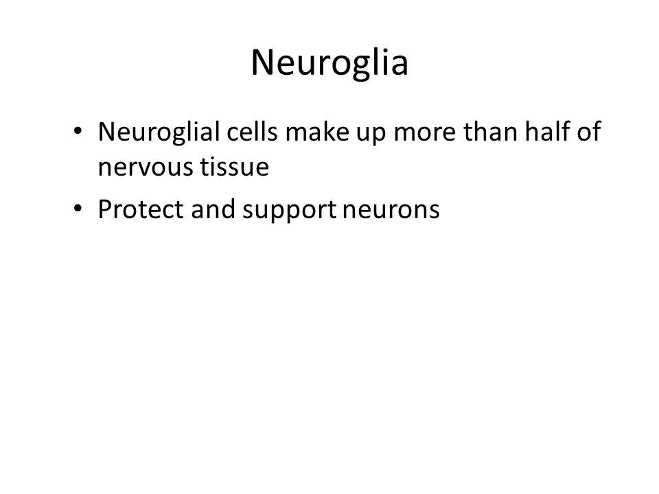 Neuroglia Neuroglial cells make up more than half of nervous tissue
