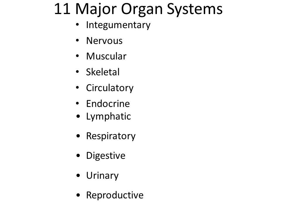 11 Major Organ Systems Integumentary Nervous Muscular Skeletal