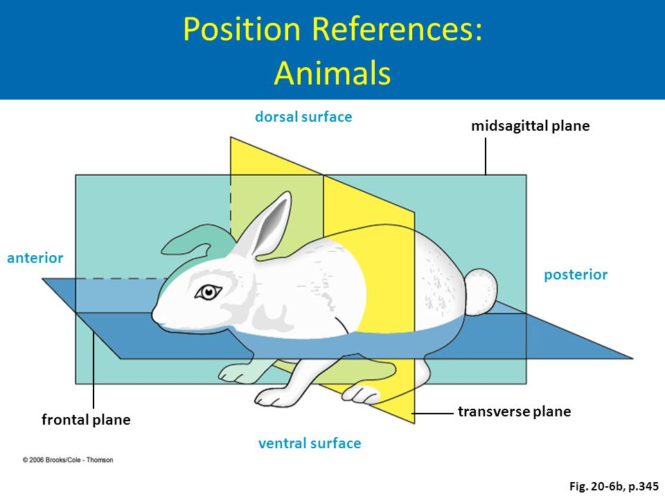 Position References: Animals