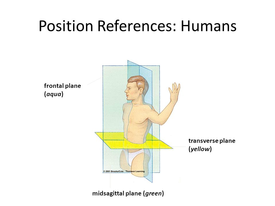 Position References: Humans