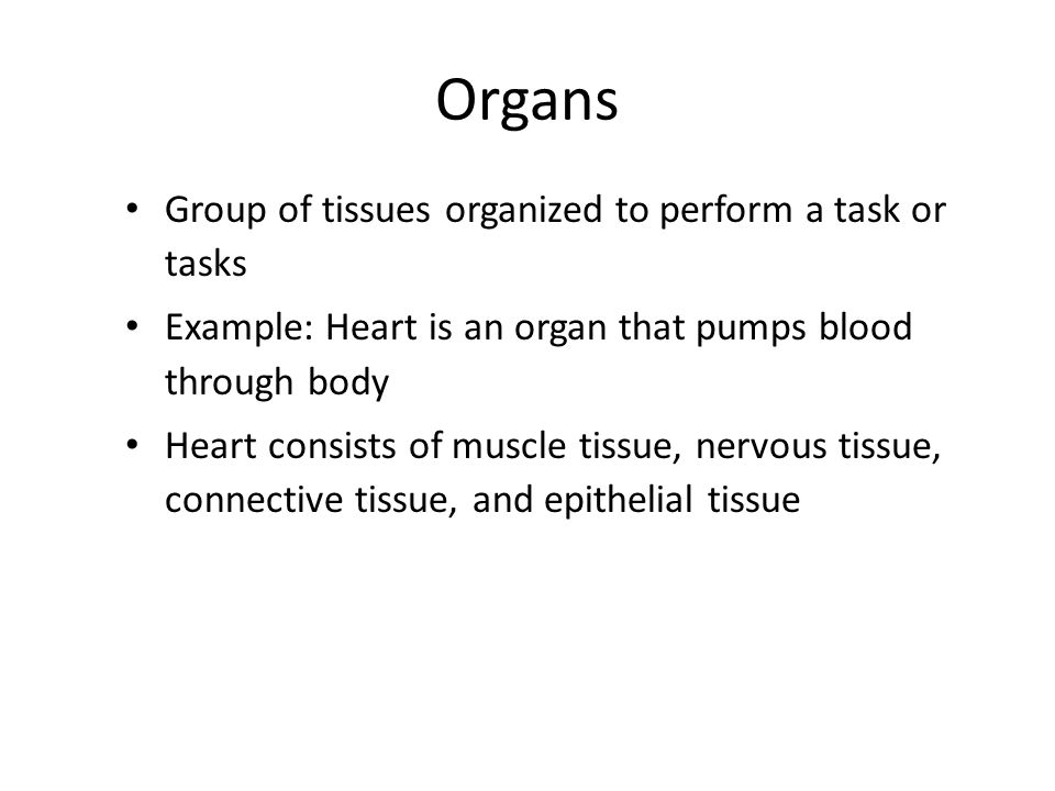 Organs Group of tissues organized to perform a task or tasks