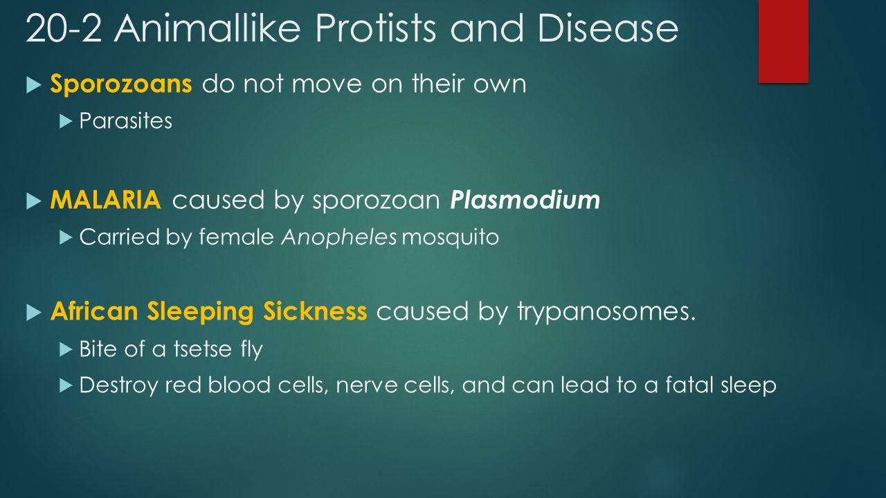 20-2 Animallike Protists and Disease