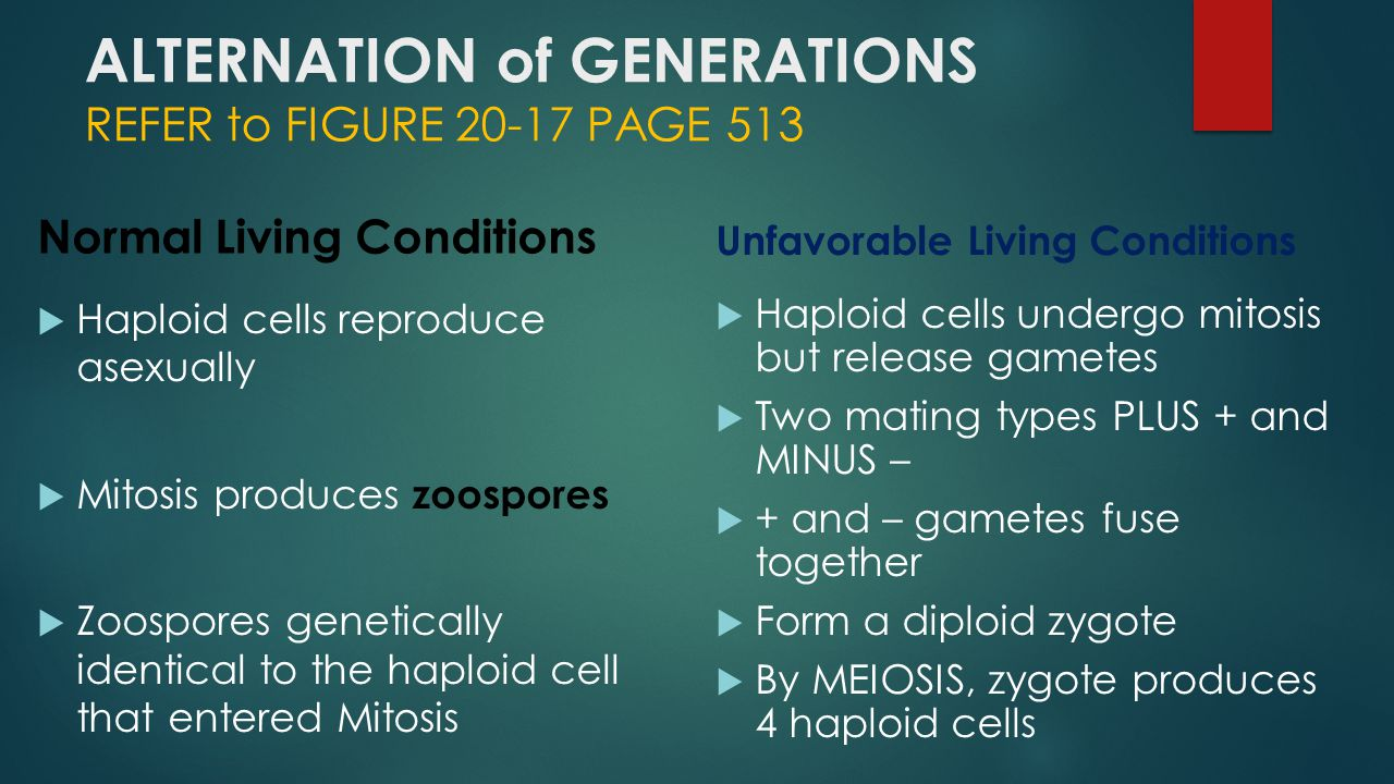 ALTERNATION of GENERATIONS REFER to FIGURE 20-17 PAGE 513