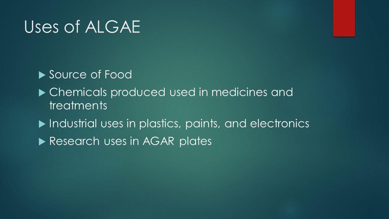 Uses of ALGAE Source of Food