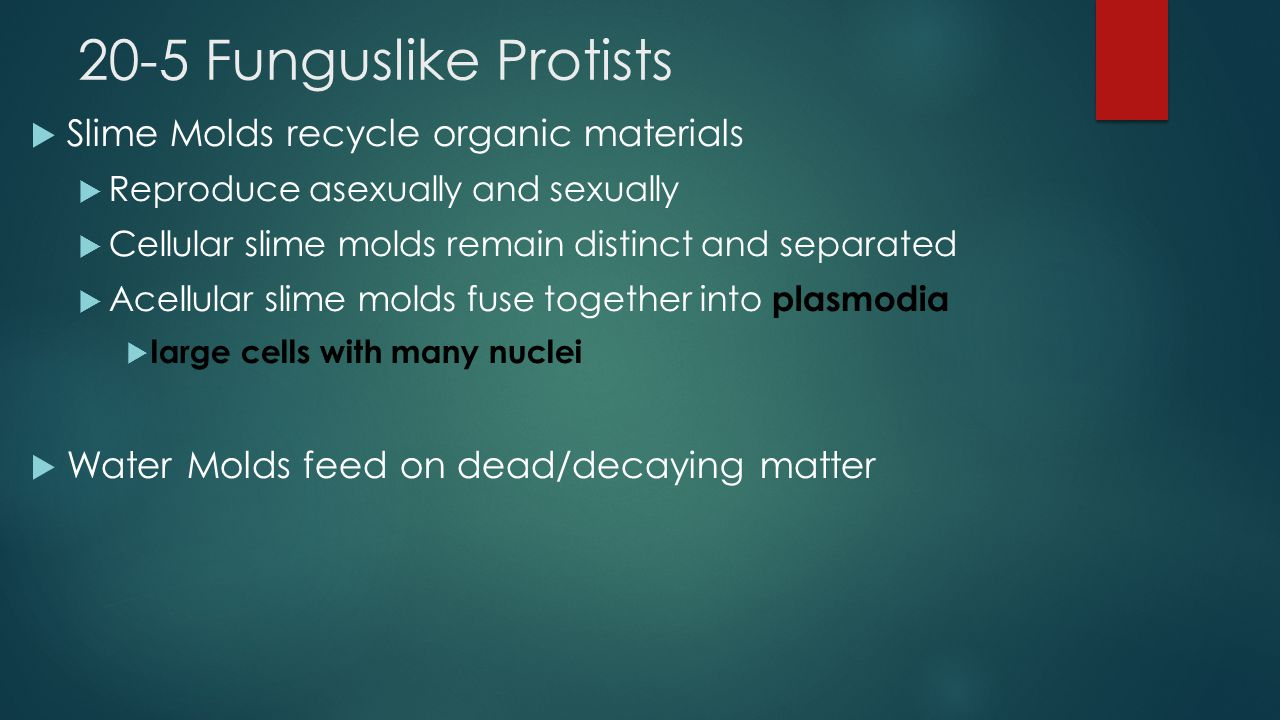 20-5 Funguslike Protists Slime Molds recycle organic materials