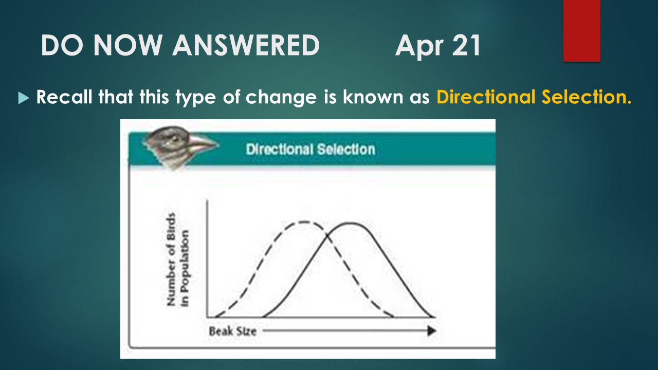 DO NOW ANSWERED Apr 21 Recall that this type of change is known as Directional Selection.