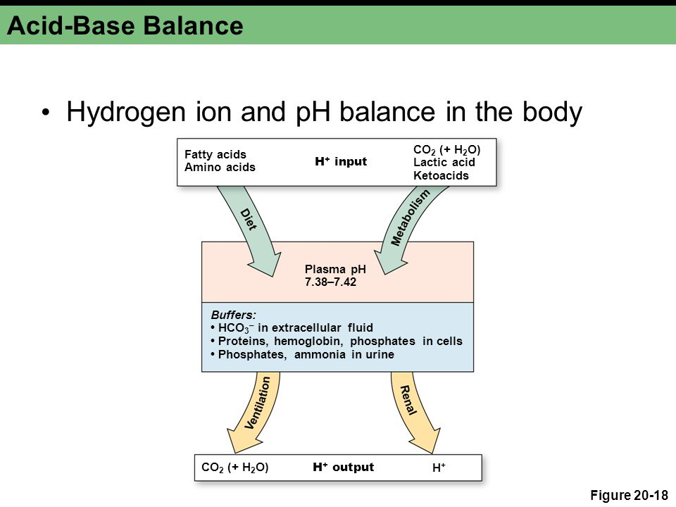 Hydrogen ion and pH balance in the body