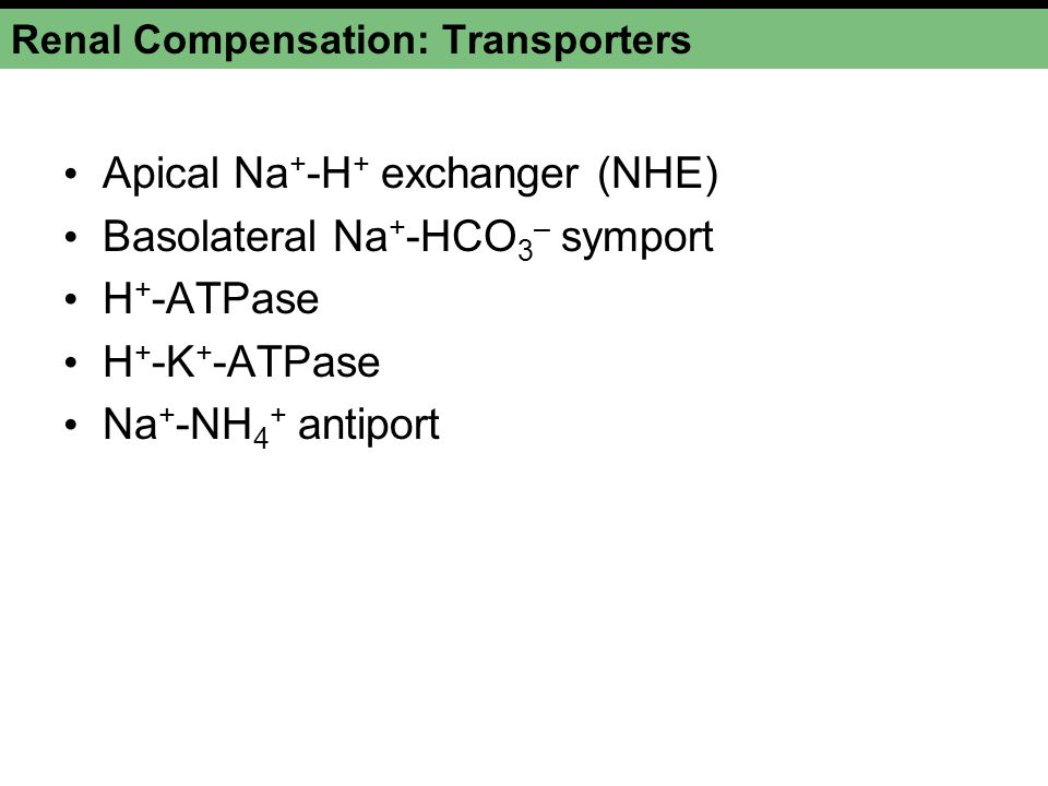 Renal Compensation: Transporters