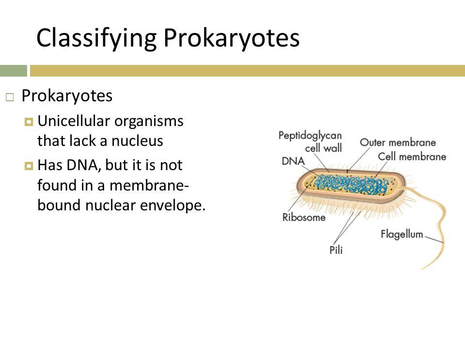 Classifying Prokaryotes