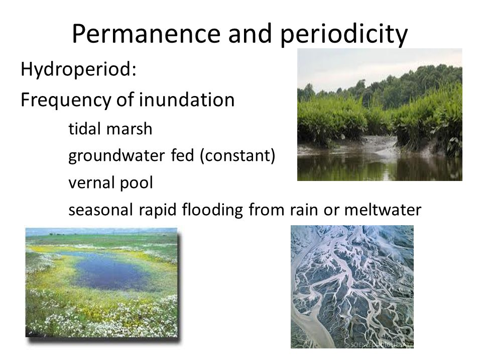 Permanence and periodicity