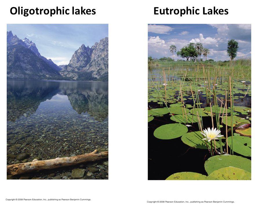 Oligotrophic lakes Eutrophic Lakes