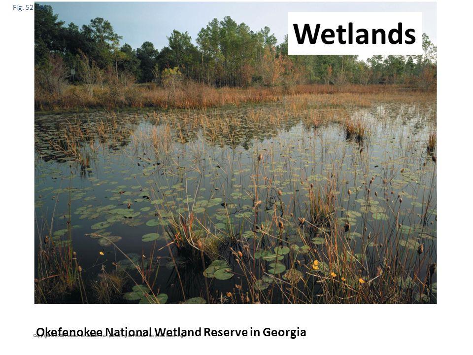 Wetlands Okefenokee National Wetland Reserve in Georgia Fig. 52-18c
