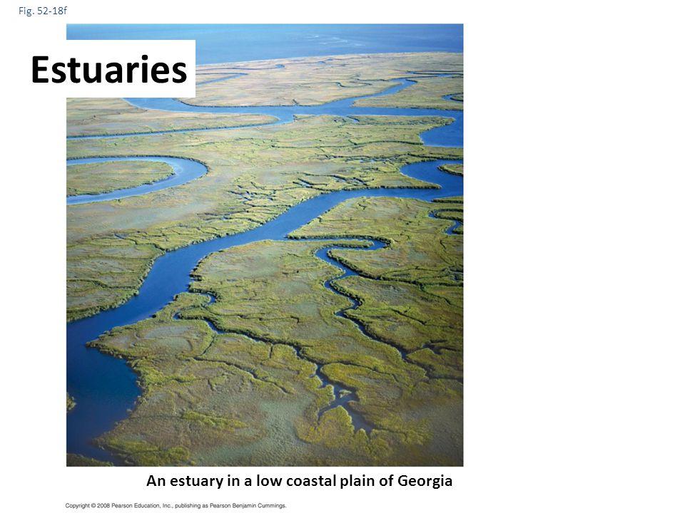 Estuaries An estuary in a low coastal plain of Georgia Fig. 52-18f