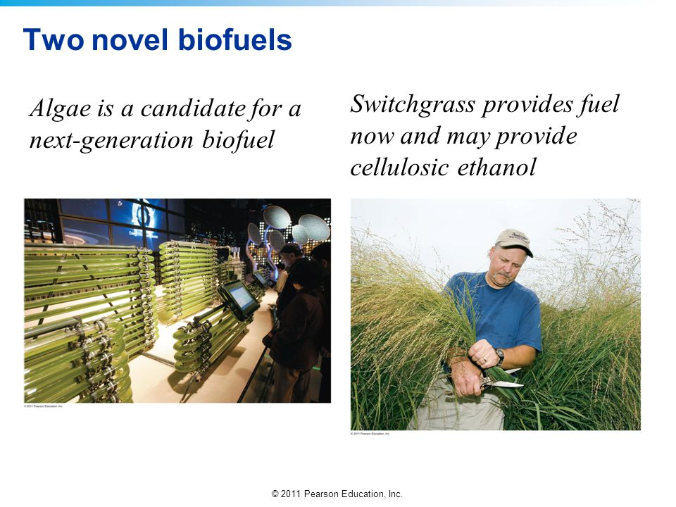 Two novel biofuels Switchgrass provides fuel now and may provide cellulosic ethanol.