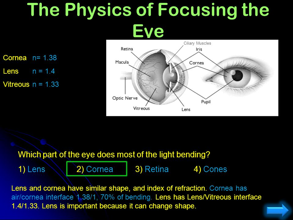 The Physics of Focusing the Eye