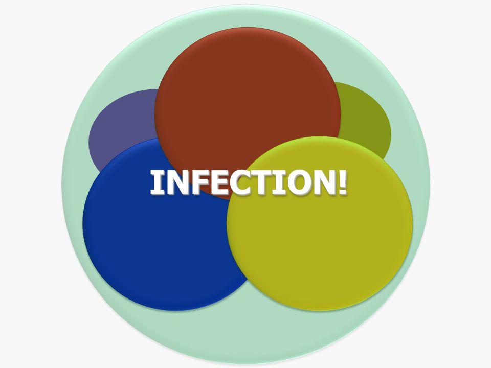 bacteria viruses fungi