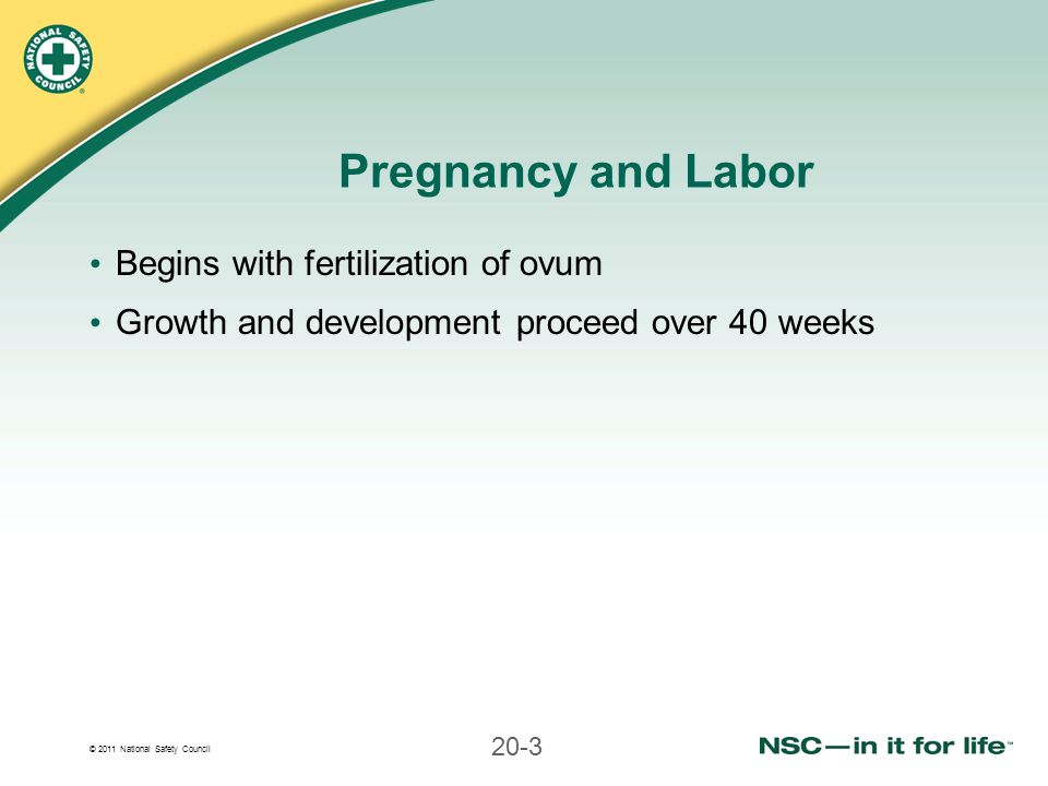 Pregnancy and Labor Begins with fertilization of ovum