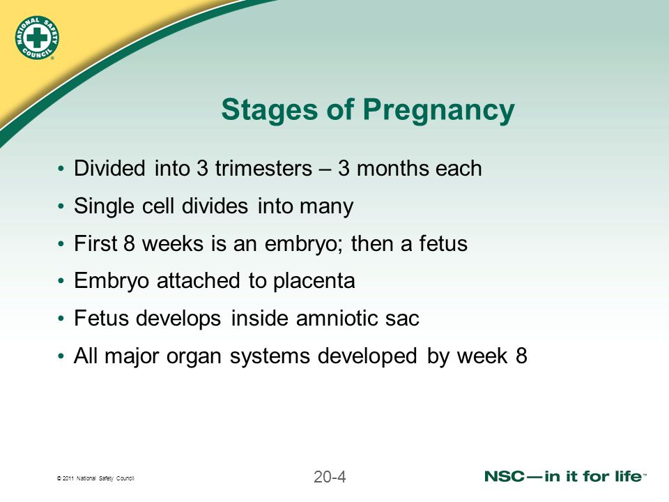 Stages of Pregnancy Divided into 3 trimesters – 3 months each
