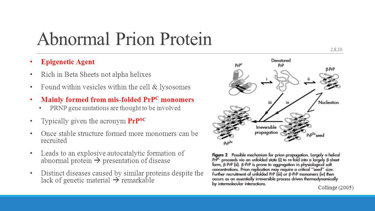 Abnormal Prion Protein