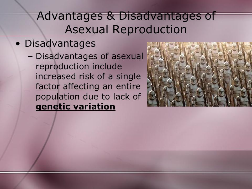 Advantages & Disadvantages of Asexual Reproduction