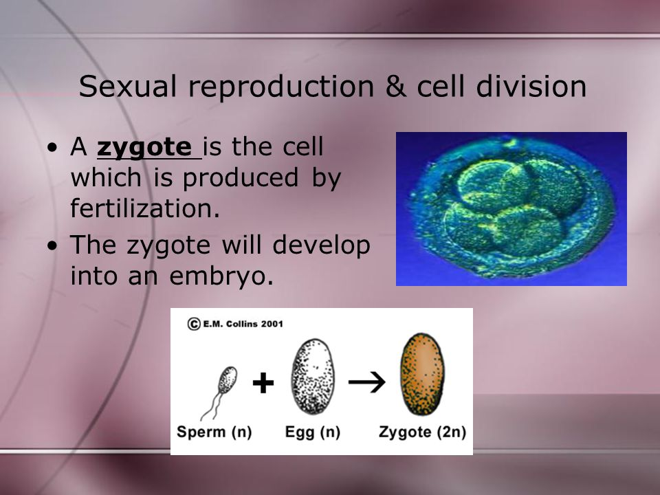Sexual reproduction & cell division