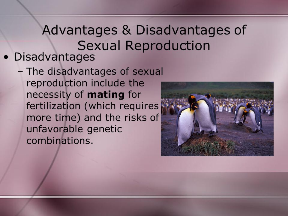 Advantages & Disadvantages of Sexual Reproduction