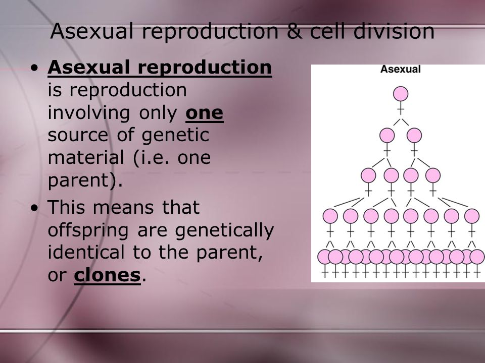 Asexual reproduction & cell division