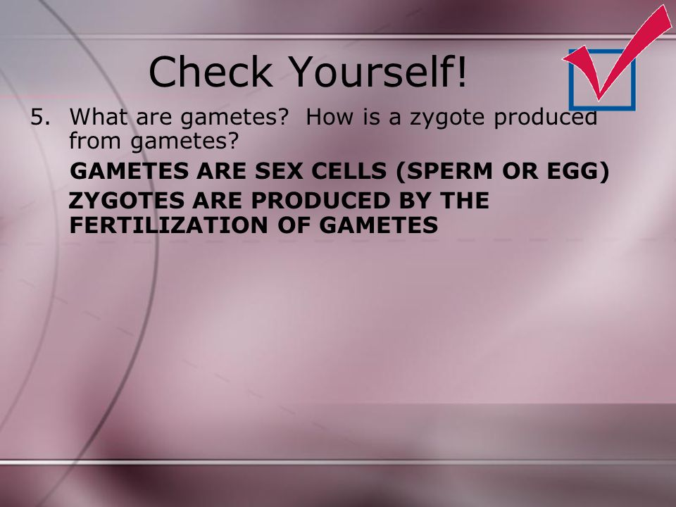Check Yourself! What are gametes How is a zygote produced from gametes GAMETES ARE SEX CELLS (SPERM OR EGG)
