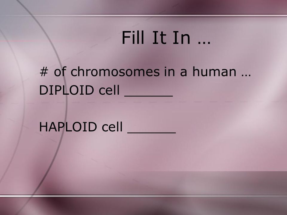 Fill It In … # of chromosomes in a human … DIPLOID cell ______
