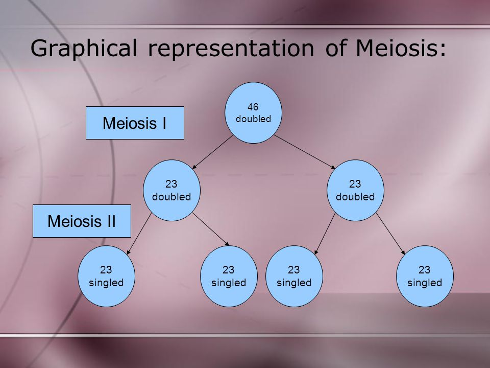 Graphical representation of Meiosis: