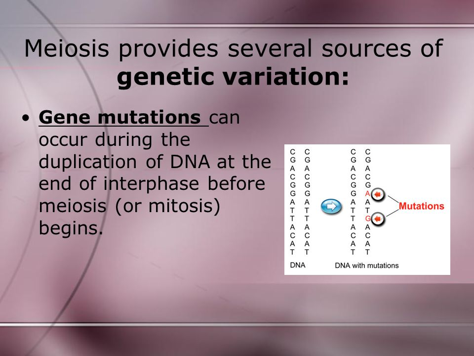 Meiosis provides several sources of genetic variation: