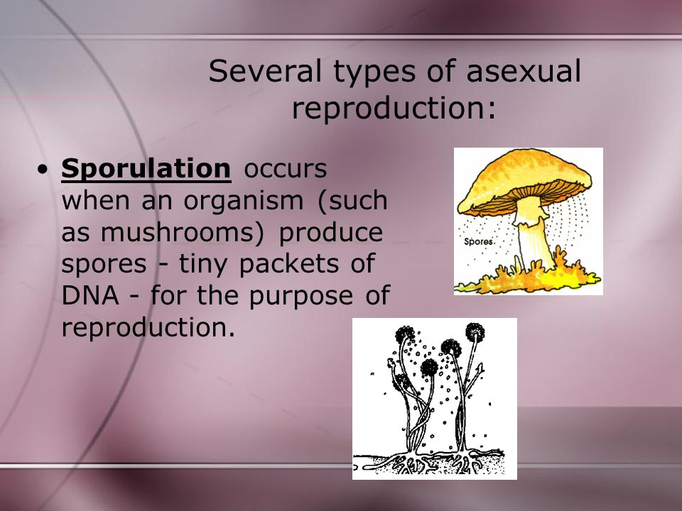 Several types of asexual reproduction: