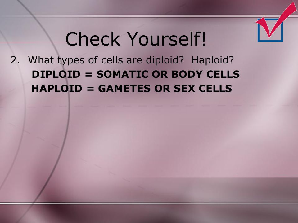 Check Yourself! What types of cells are diploid Haploid