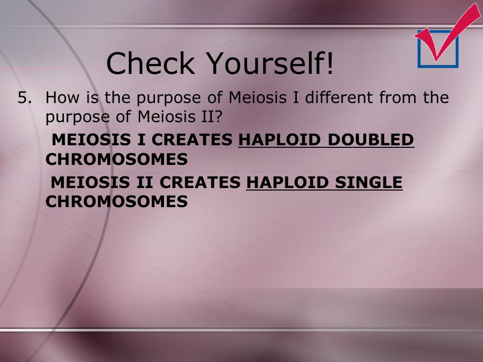 Check Yourself! How is the purpose of Meiosis I different from the purpose of Meiosis II MEIOSIS I CREATES HAPLOID DOUBLED CHROMOSOMES.