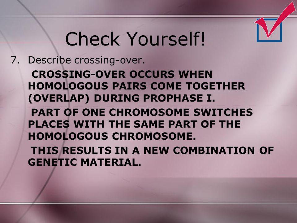 Check Yourself! Describe crossing-over.