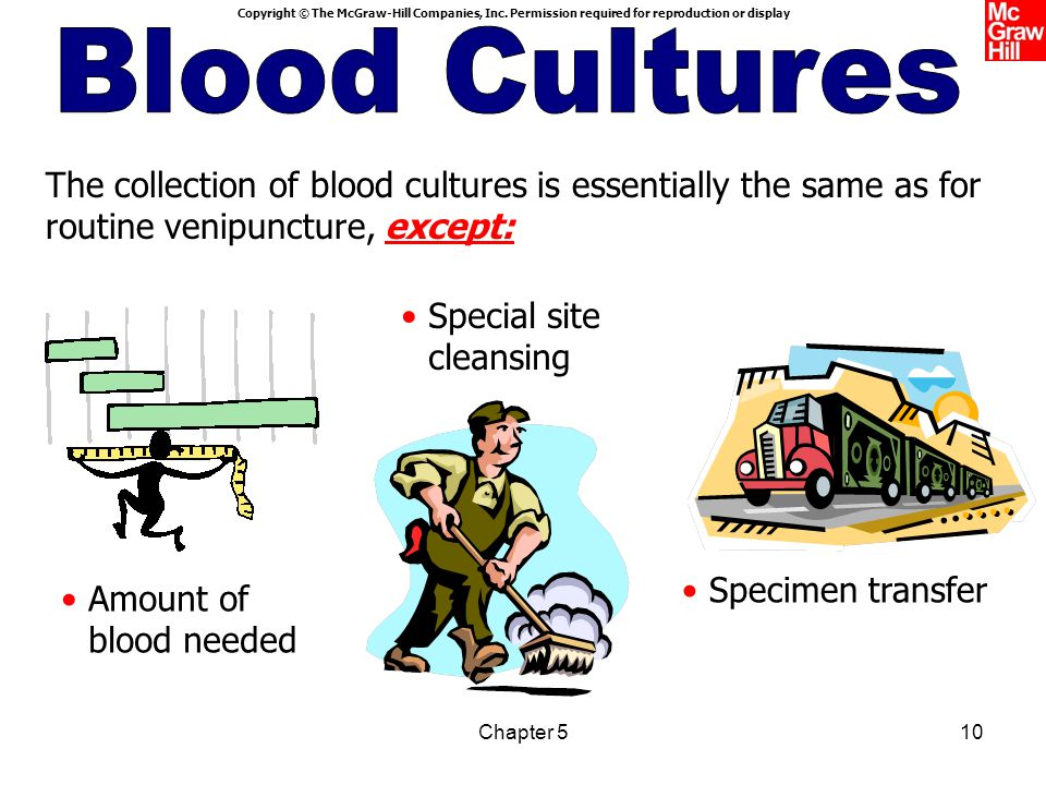 blood culture test procedure pdf
