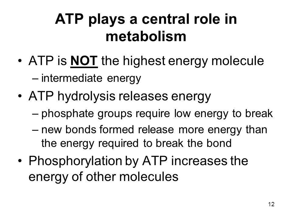 ATP plays a central role in metabolism