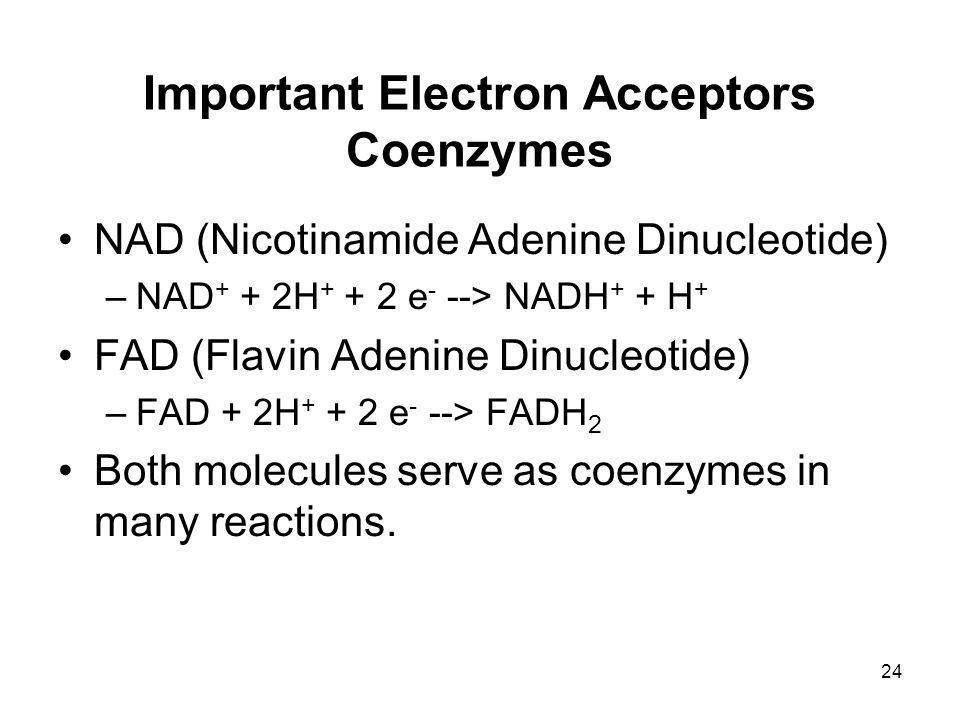 Important Electron Acceptors Coenzymes