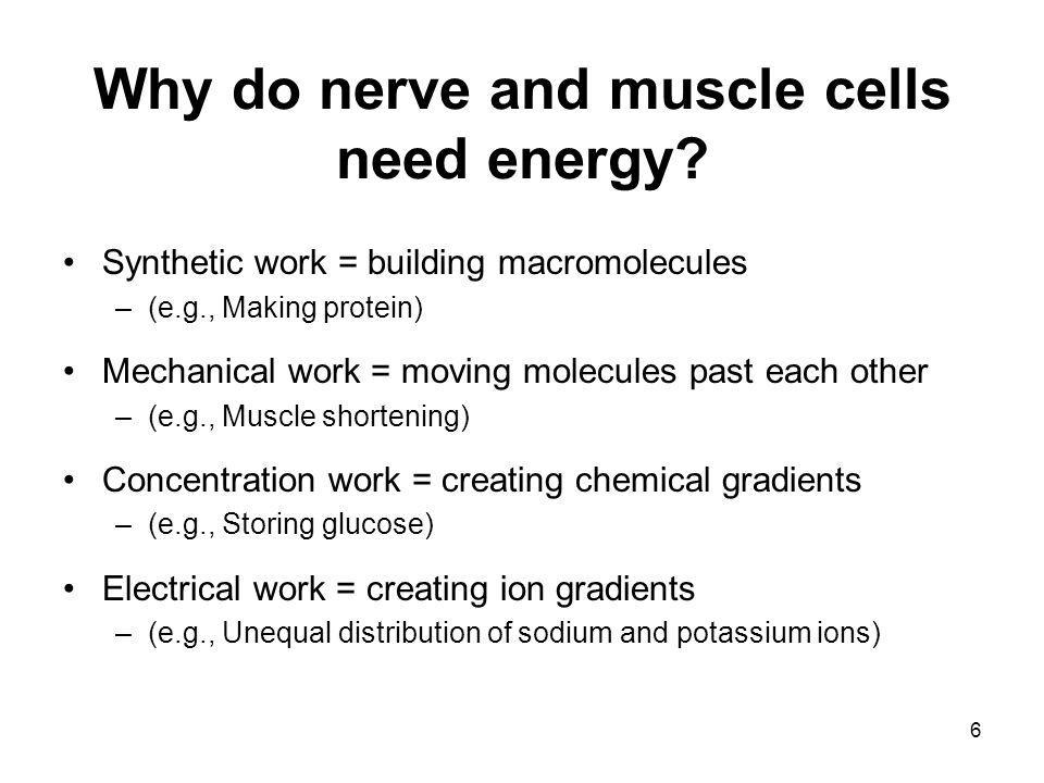 Why do nerve and muscle cells need energy