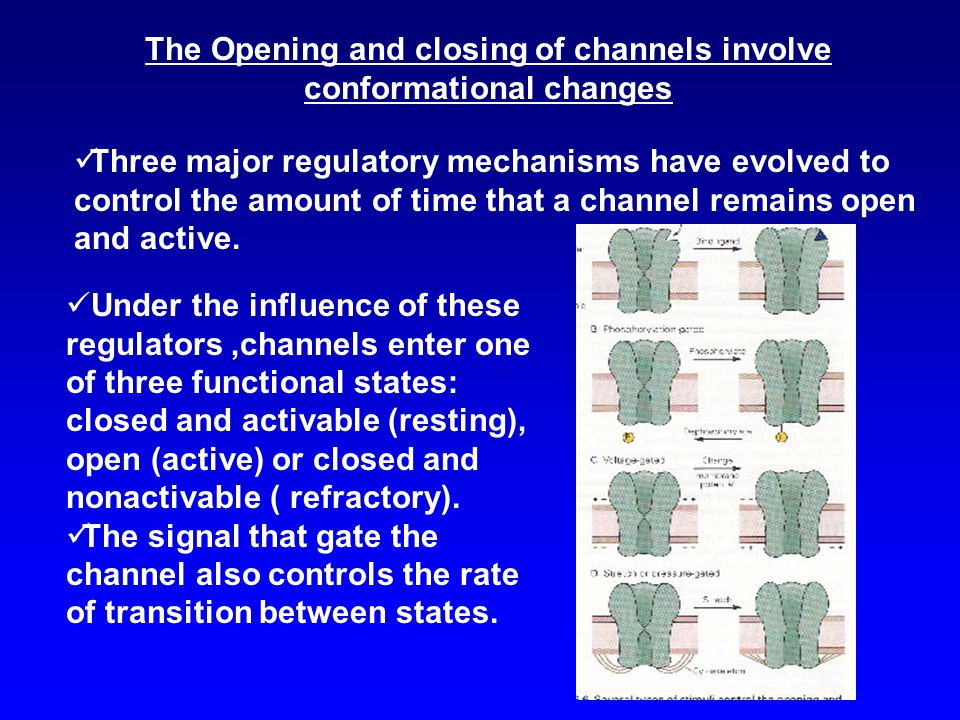 The Opening and closing of channels involve conformational changes