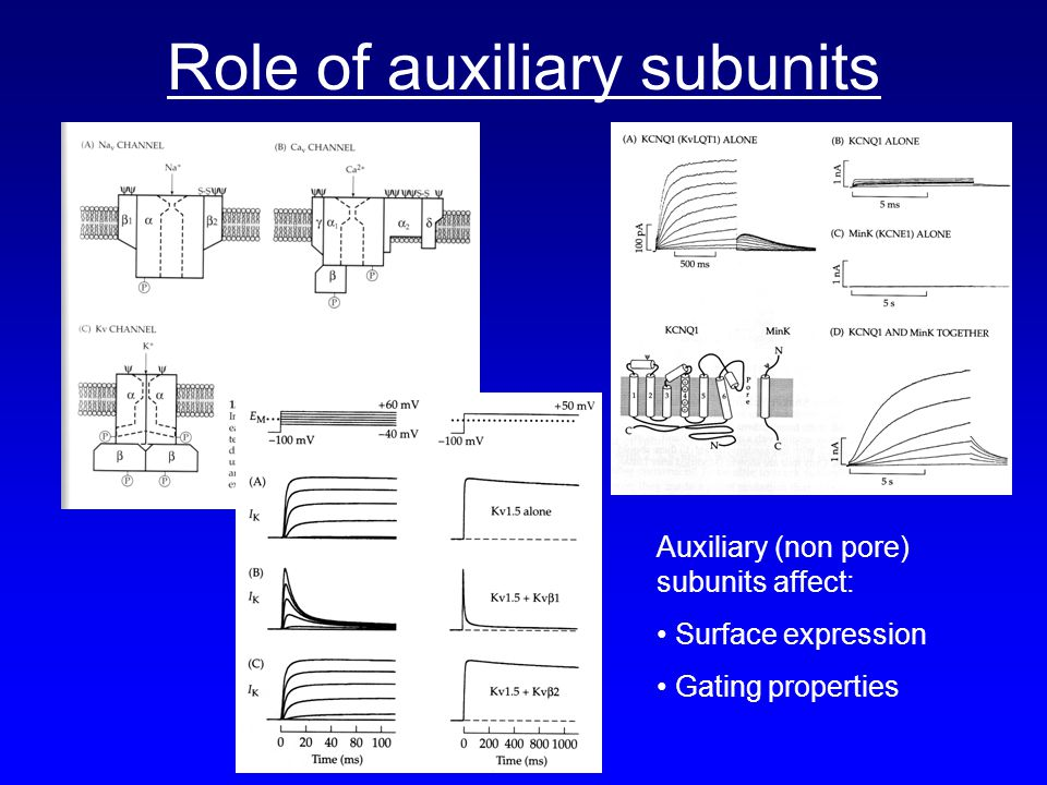Role of auxiliary subunits