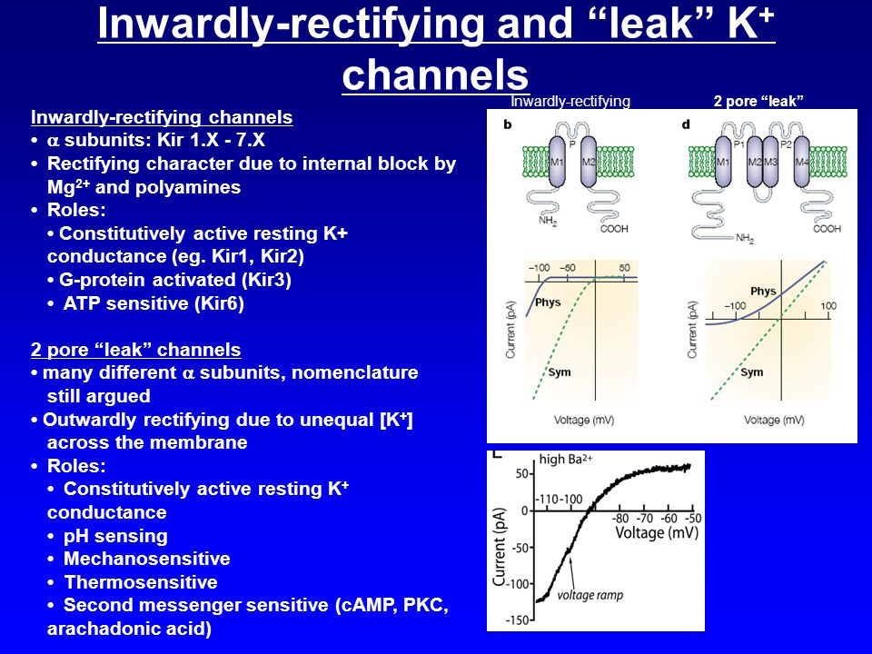 Inwardly-rectifying and leak K+ channels