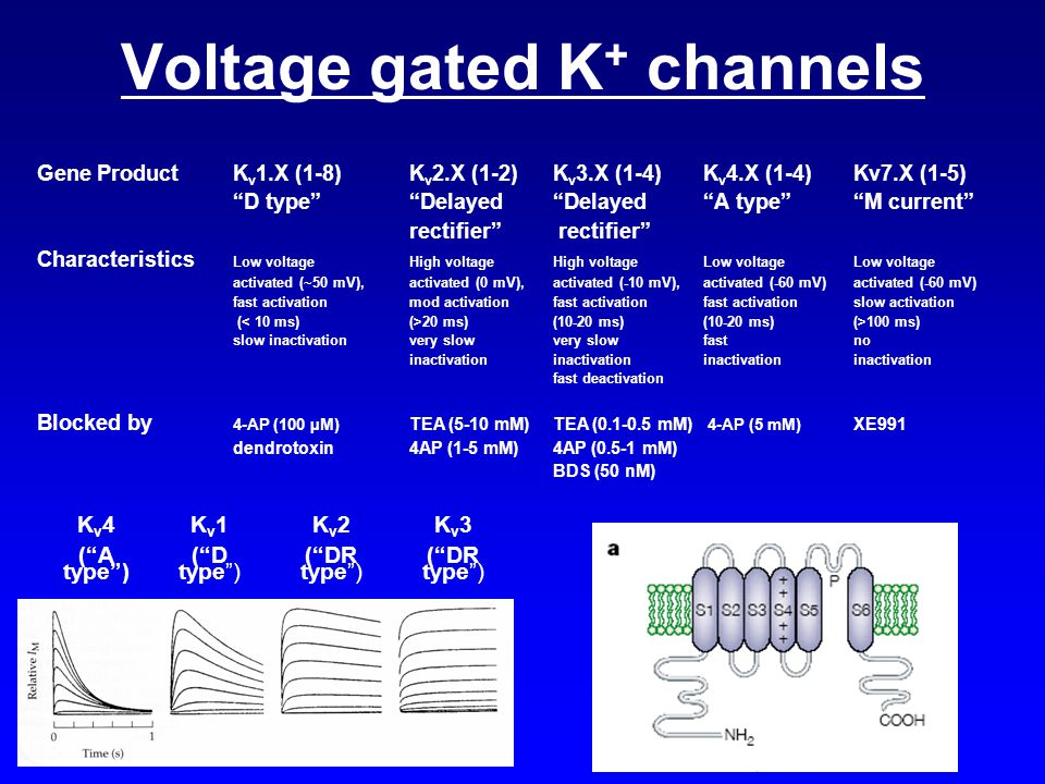 Voltage gated K+ channels