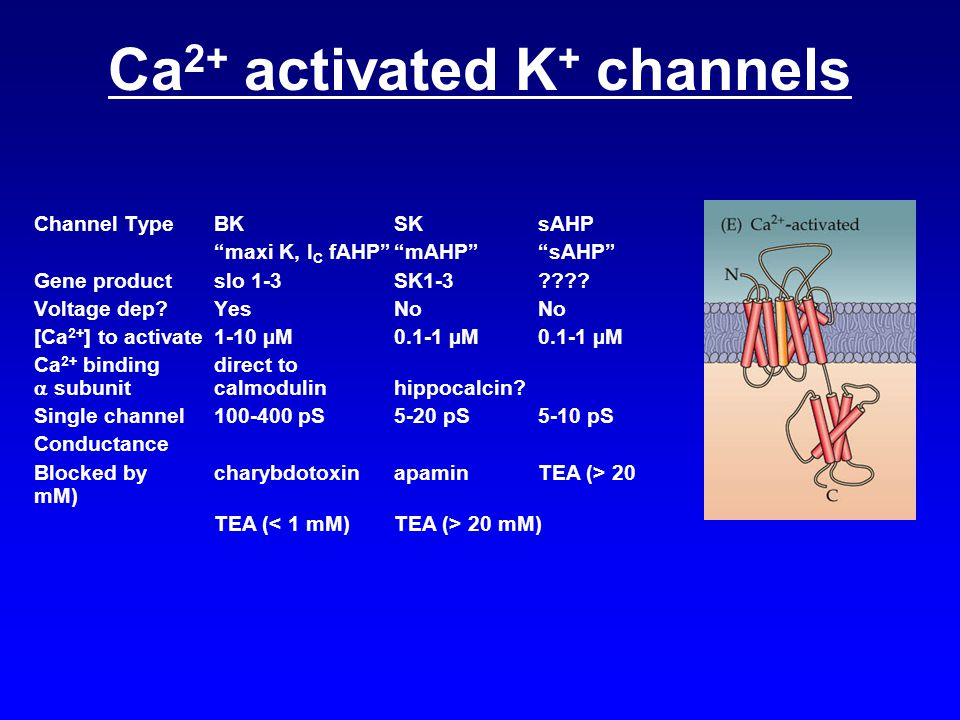 Ca2+ activated K+ channels