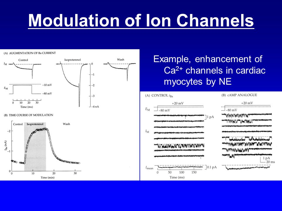 Modulation of Ion Channels